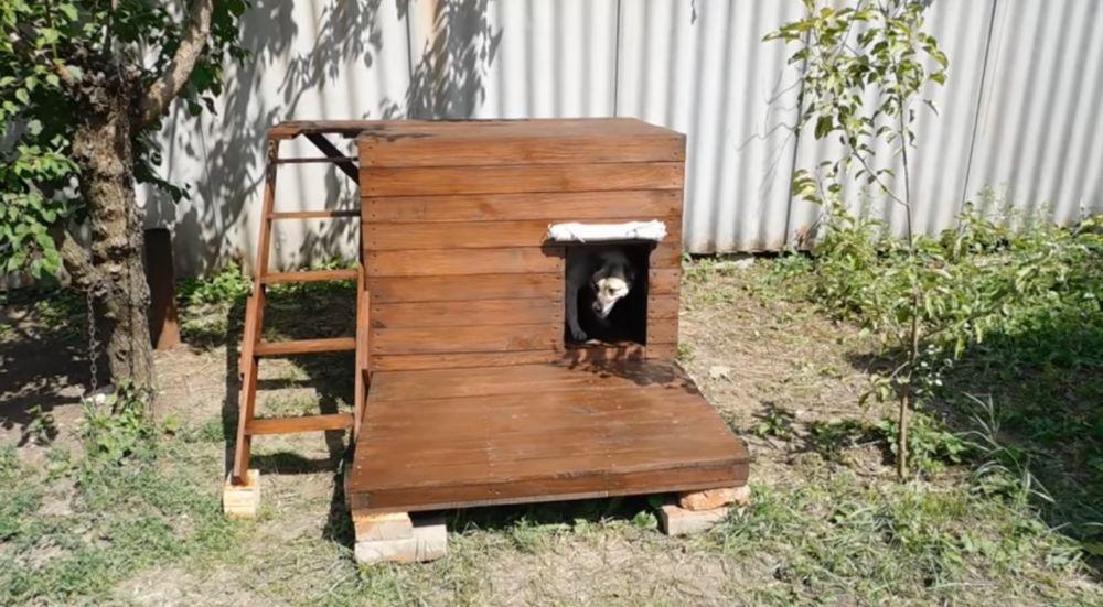 Собачья будка - общий вид