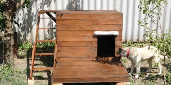 Собачья будка – просторный и уютный дом для своего любимца!