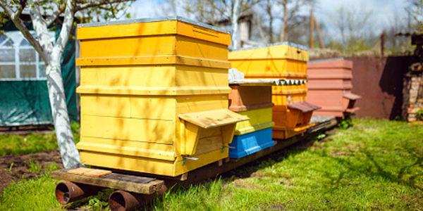 Делаем ульи для пчел своими руками – фото, видео, чертежи