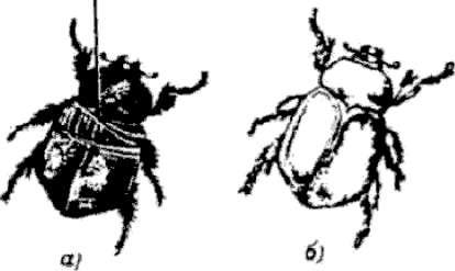 Способы металлизации растений, насекомых и других неметаллических предметов