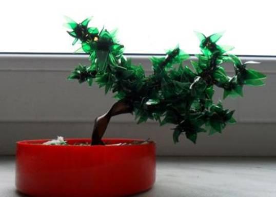 Декоративное комнатное дерево