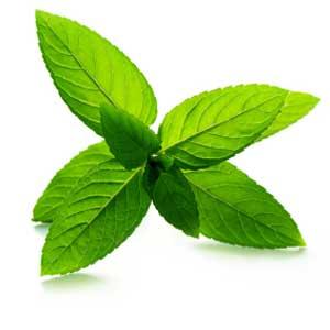 Четыре способа выращивания растений в квартире