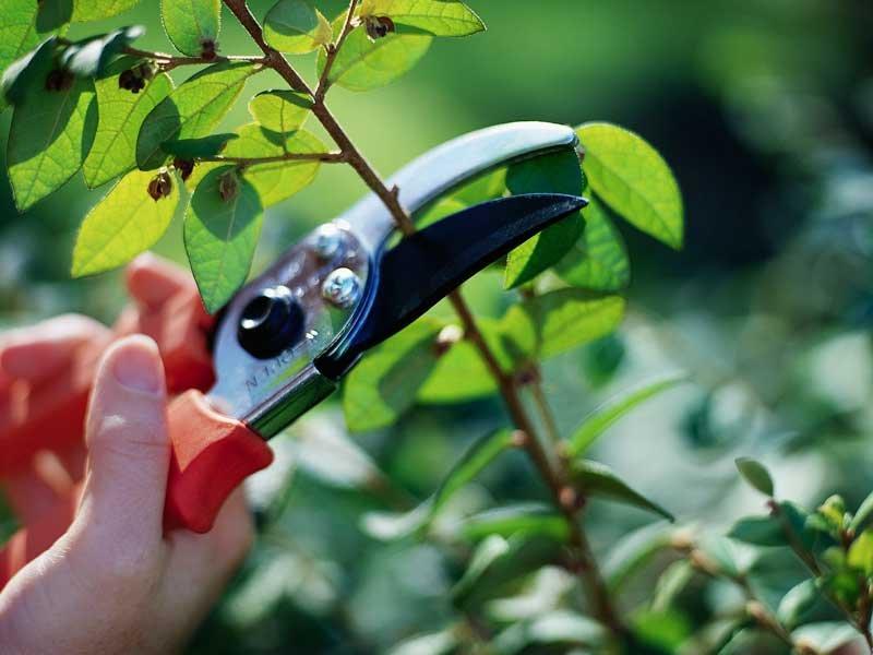 Как подрезать деревья