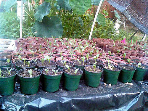 Летнее накрытие для растений