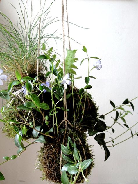 Домашний подвесной сад