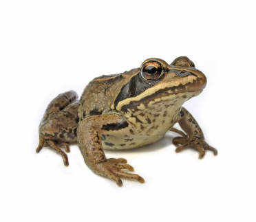 Лягушка папье-маше своими руками