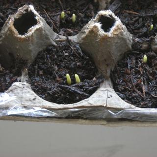 Оригинальные идеи для выращивания рассады