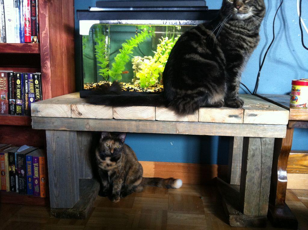 Журнальный столик для аквариума своими руками