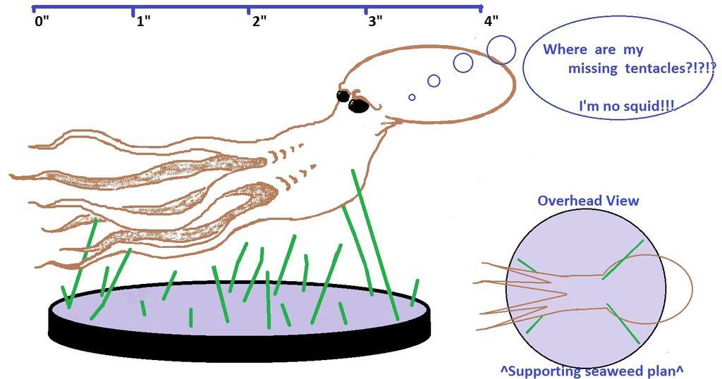 Как сделать осьминога из проволоки