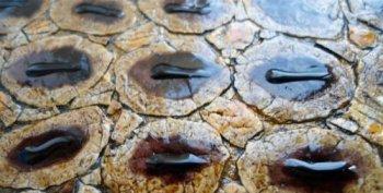 Имитация змеиной кожи с помощью яичной скорлупы