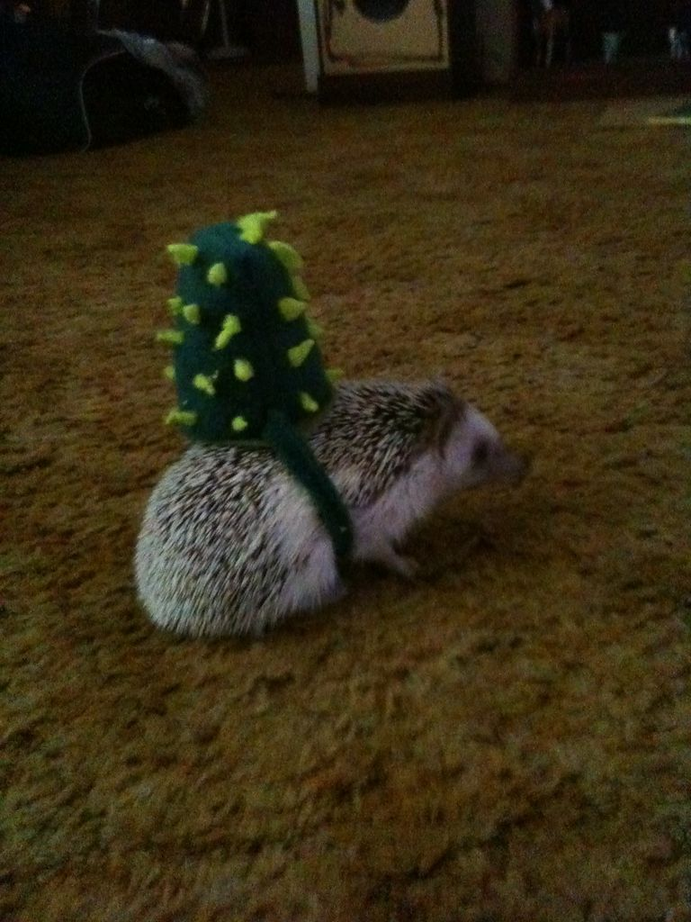 Кактусовый костюм