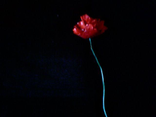 Роза из алюминиевой банки