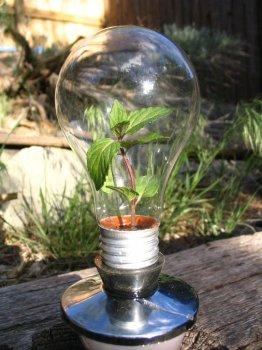 Мини-сад в лампе накаливания
