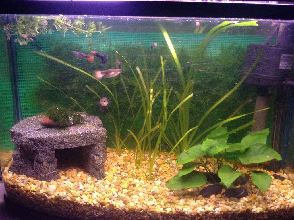 Как обустроить аквариум своими руками