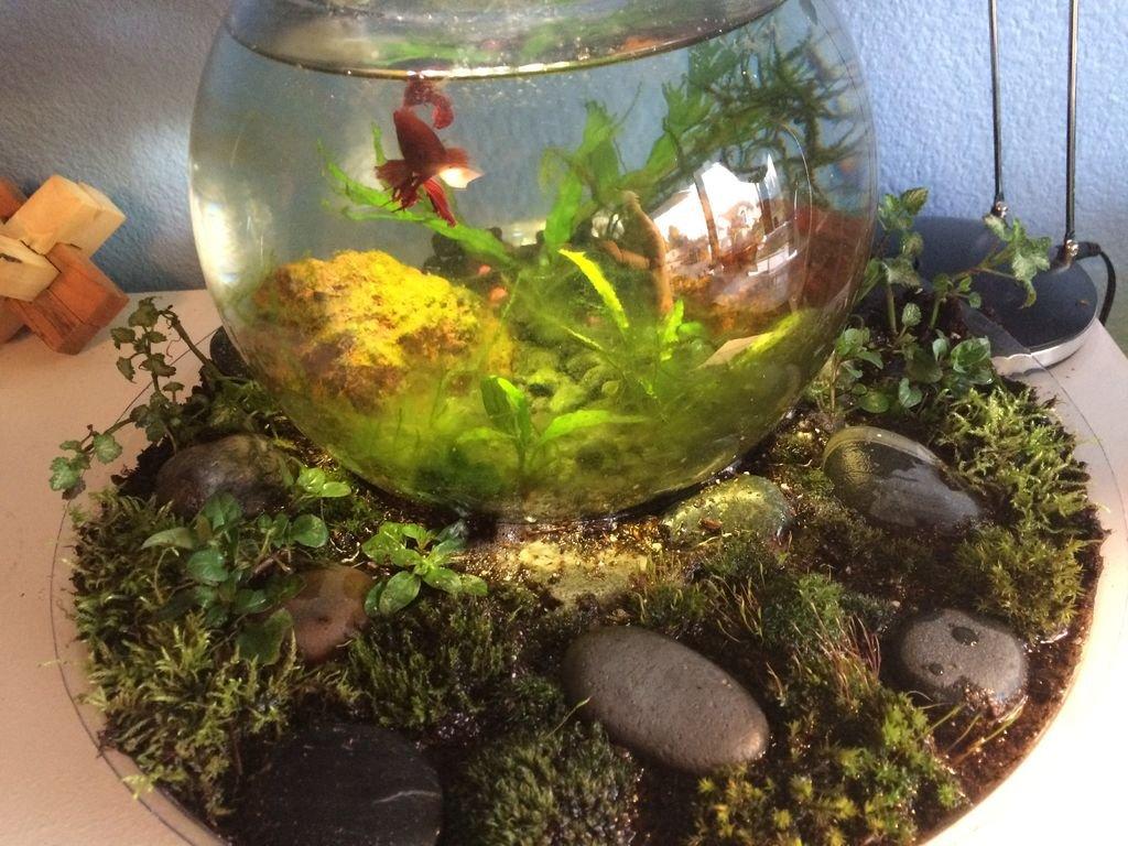 Поддон аквариума своими руками фото 976