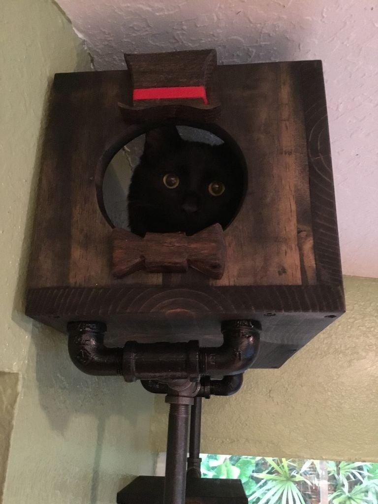Стенка для кота своими руками