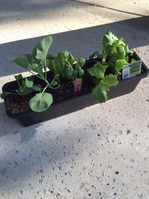 Система автоматического полива комнатных растений своими руками