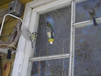 Вблизи окна